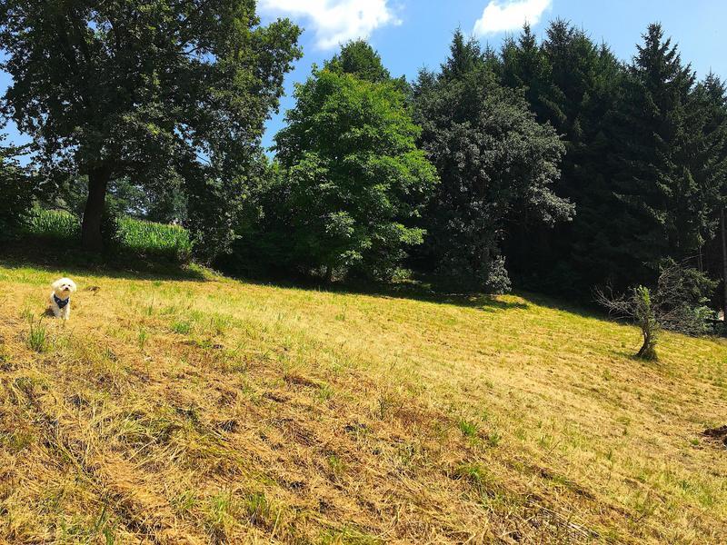 Grundstück nahe Fernitz mit leichter Hanglage, Ganztagessonne und Ruhelage!